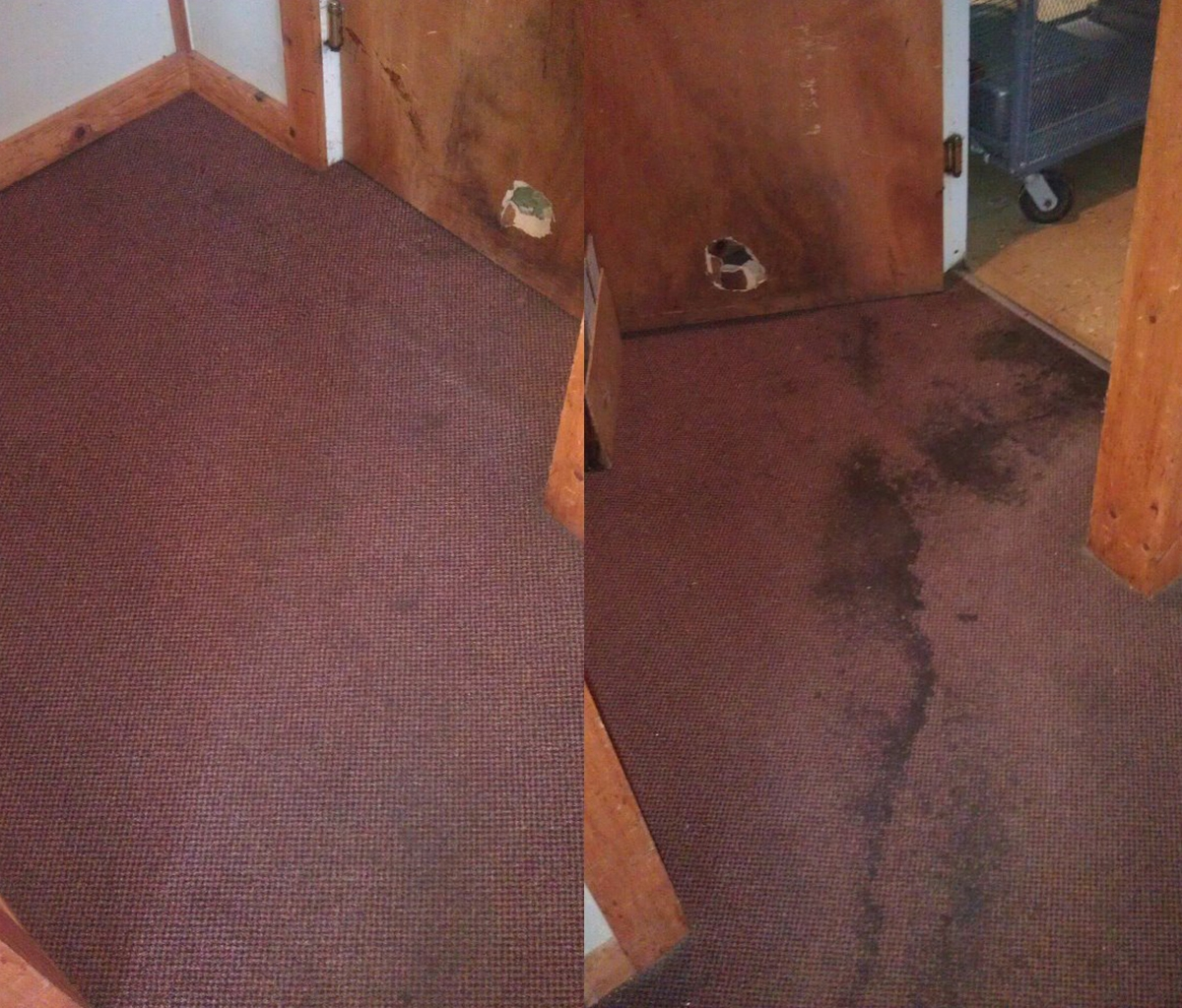 Carpet Cleaing Before and After